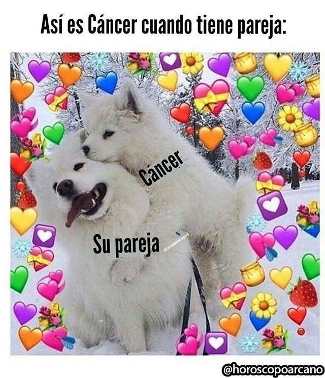 Menciona Sigueme Cancerhoroscopoarcano Cancer Astrologia Elhoroscopodice Zodiaco Signosdelzodiaco Horos Memes Divertidos Memes Romanticos Meme Gato
