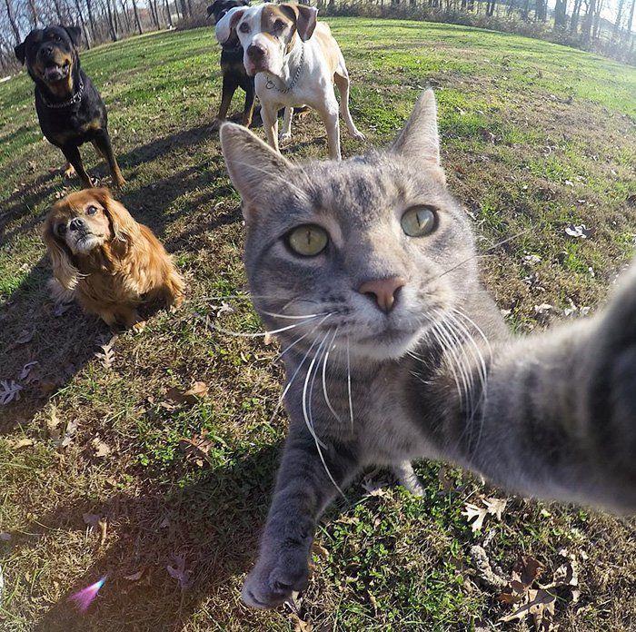 Il semblerait que la folie des autoportraits pris avec l'appareil photo des smartphones se soit emparée de nos amis les chats ! On en veut pour preuve que l'un d'eux, Manny, est devenu une véritable célébrité sur la Toile grâce à ça…