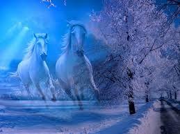 Výsledok vyhľadávania obrázkov pre dopyt kone v zime