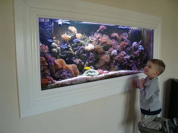 The 25 best fish tank wall ideas on pinterest aquarium for Fish tank built into wall