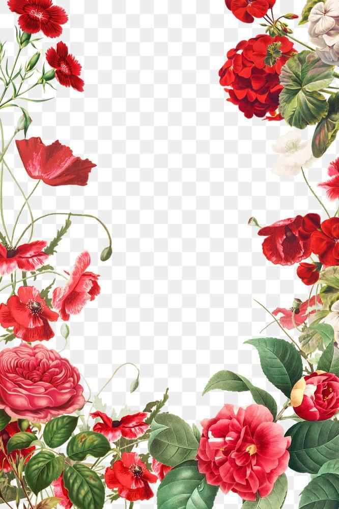 Vintage Red Flowers Frame Png Illustration Premium Image By Rawpixel Com Paeng In 2020 Vintage Decor Red Flowers Frame