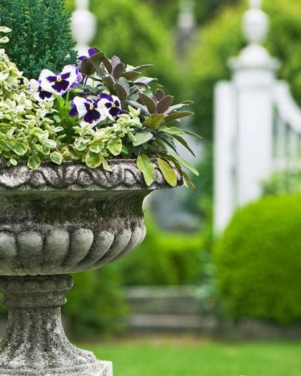 PLANTING UP YOUR URN WITH SEASONAL SEEDLINGS