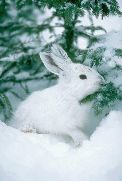 17 images about rabbit and hare friends on pinterest. Black Bedroom Furniture Sets. Home Design Ideas