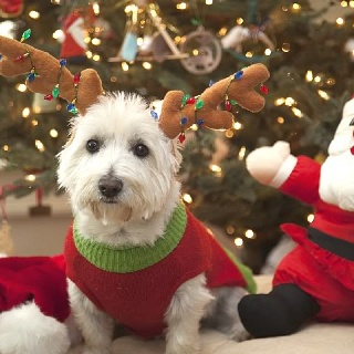 81 Best Images About Dog Christmas Cards On Pinterest