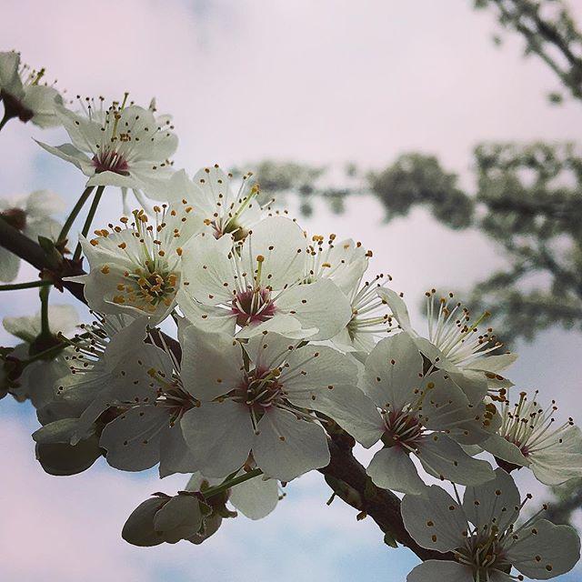 Primavera 🌼