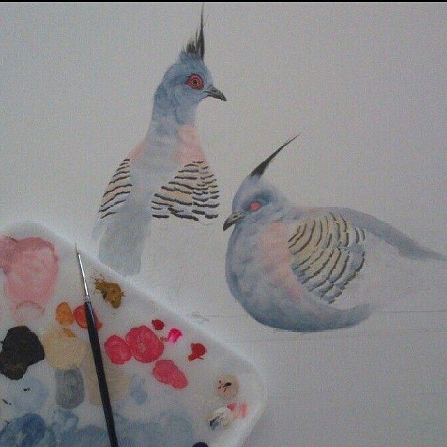"New ""Pigeons"" in progress. l just love these #birds! #nawden #triplesartists #BESTDM #deviantshout #illustrateyourworld #crestedpigeon #australianbirds #acrylicpainting #daily__art #artloverslane #artfido #artistmafia #rural #rural_love #topworkofart #realism_art"