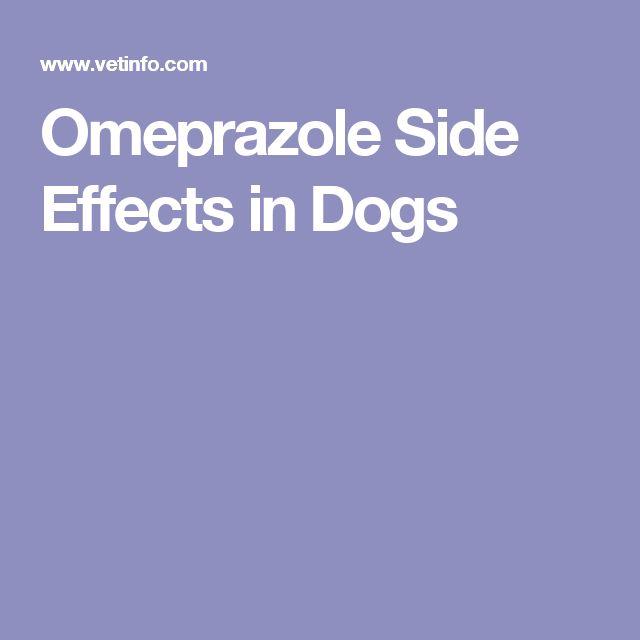 Omeprazole Side Effects in Dogs