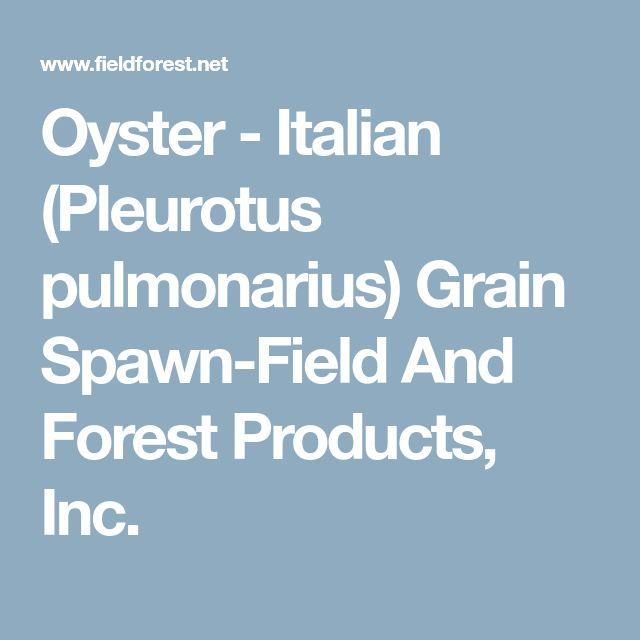 Oyster - Italian (Pleurotus pulmonarius) Grain Spawn-Field And Forest Products, Inc.