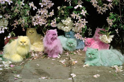 Pastel persians!!! There is nothing Tim Walker can't do.