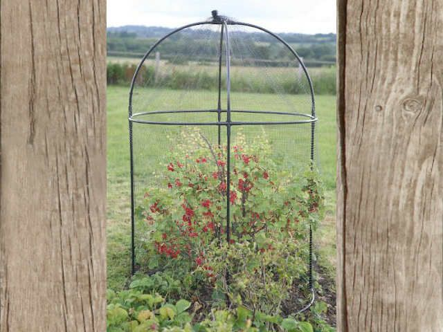 Domed fruit cage for plant protection