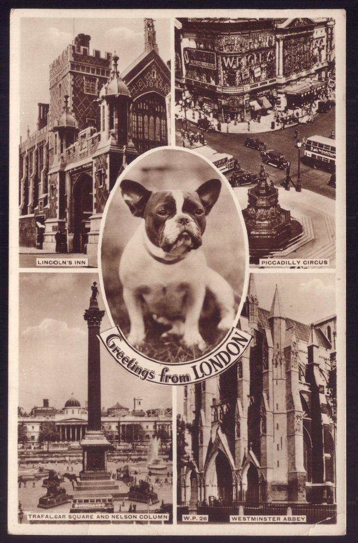 French Bulldog DOG. Vintage REAL PHOTO postcard UK