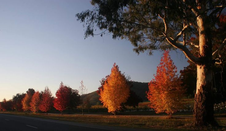 """Find out out how you can move harmoniously into Autumn on the blog post - """"Autumn and the winds of change"""""""
