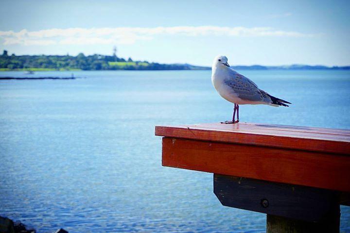 Paihia Northland New Zealand    Todas las fotos son tomadas por mí excepto en las muy raras ocasiones en las que cito al fotógrafo en la descripción. Ninguna tiene photoshop o post-procesado solo a veces agrego algún filtro de Instagram.    No te pierdas ningún post: Activa las notificaciones desde el menú de mi perfil!    Facebook : http://bit.ly/2ekAKBd Instagram : http://bit.ly/2dkzLiC Twitter : http://bit.ly/2ej1GQF Pinterest : http://bit.ly/2euUVAu Tumblr : http://bit.ly/2dY95KE Flickr…