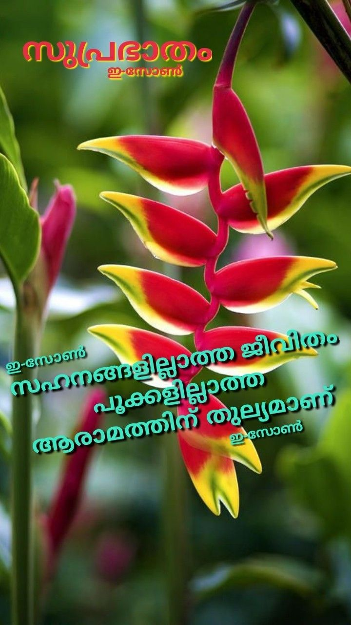 Pin by Eron on Good morning ( Malayalam ) in 2020 Good