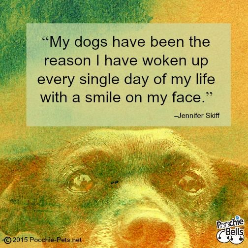 I Have Every Reason To Smile Quotes: 74 Best Dog Quotes Images On Pinterest