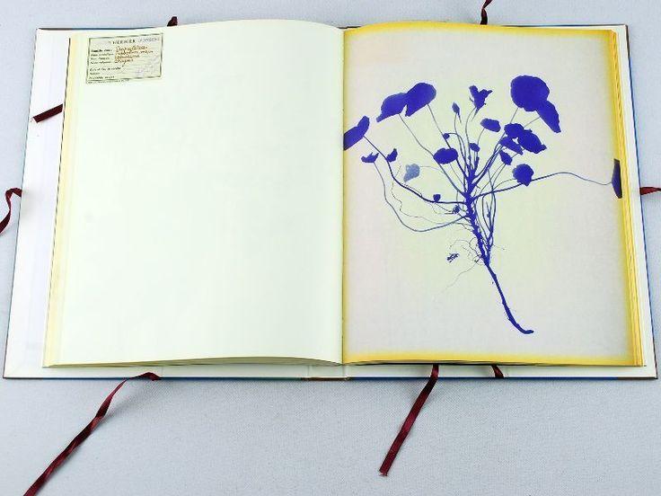 Lourdes Castro. Grand herbier d'ombres