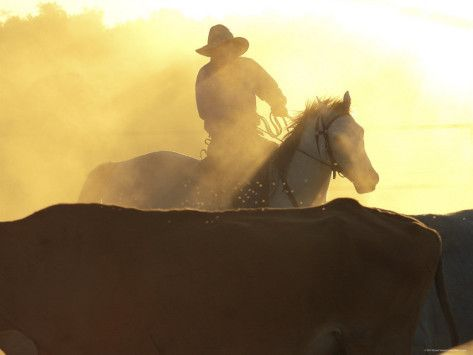 Man on Horse Working Cattle in Yards, Bullo River Station, Australia Photographic Print