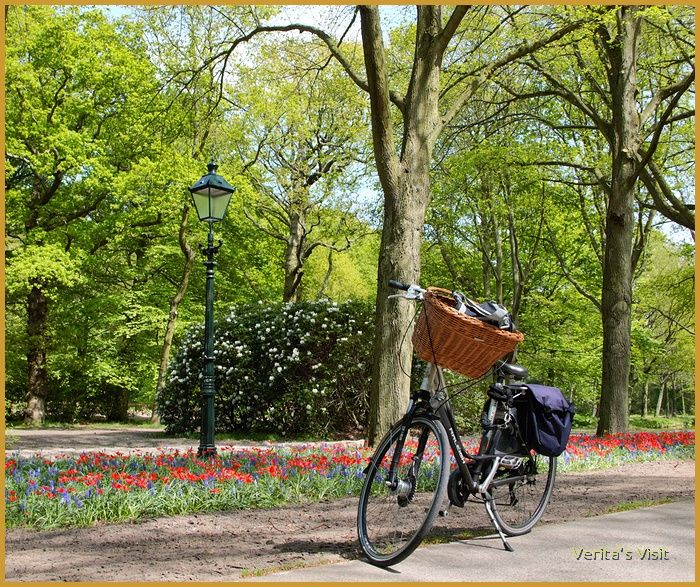 April/ May is the best time to see the flowers blooming in #TheNetherlands. This shot was made during a #bike tour through the parks of #TheHague