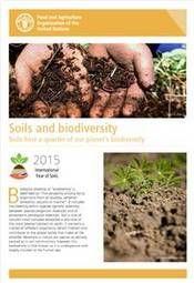 Fact sheets| 2015 International Year of Soils