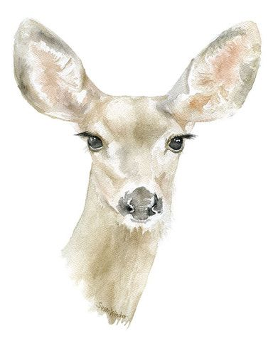 A sweet Doe watercolor giclée reproduction. Portrait/vertical orientation…