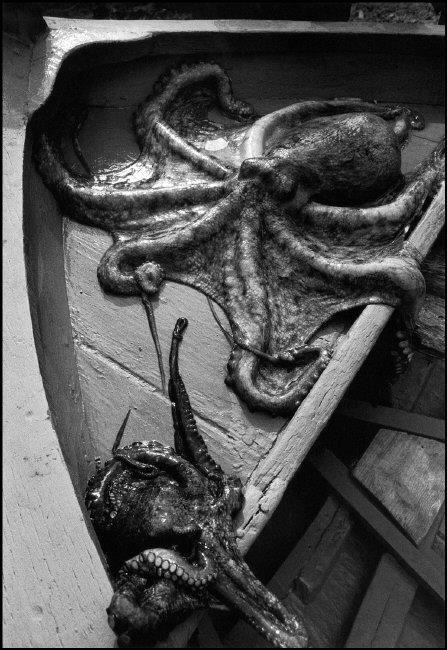 Ferdinando Scianna, Sant'Elia: Octopus on a boat, 1976 ITALY, Sicily