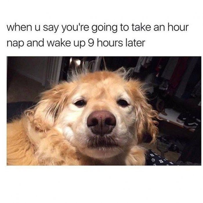 Going to take an hour nap – dog meme