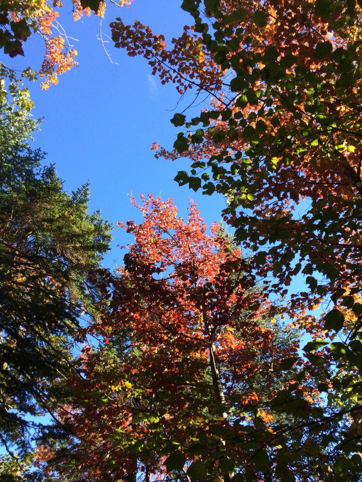 Les belles couleurs de l'automne sur la Côte-du-Sud