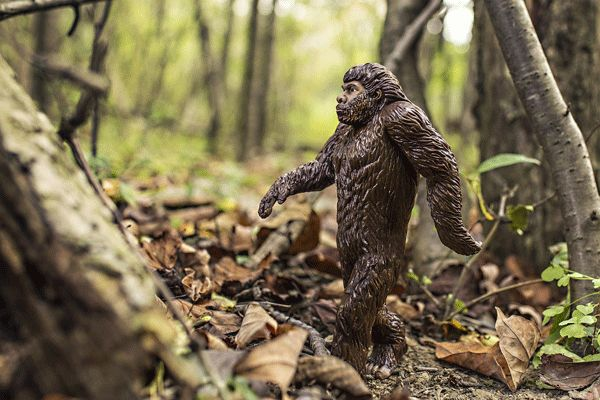 Police Not Happy About Latest Bigfoot Sighting In Maine - Bigfoot has been popping up in unusual places in Kennebunk, Maine and police have filed charges.