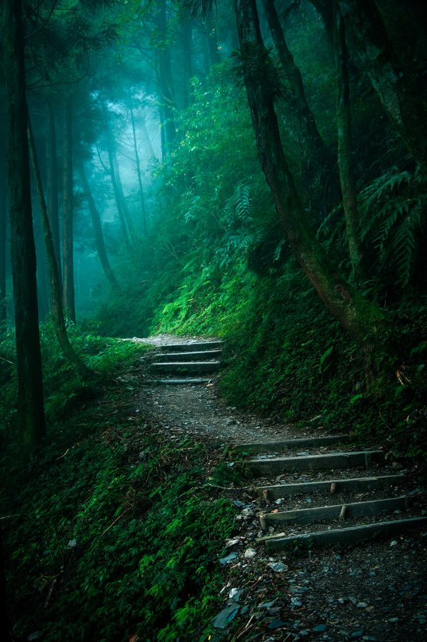 ✯ Mysterious Forest. I would love to go there and take a walk ♡