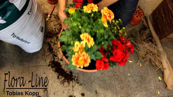 Tutorial: Wie bepflanze ich eine Schale für eine Abdankungsfeier?