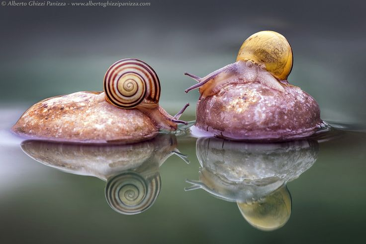 Move on! by Alberto Ghizzi Panizza on 500px