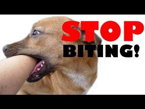 Good site on Puppy Bite Inhibition Teach puppy not to