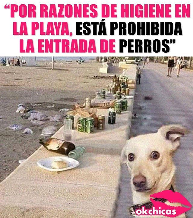Untitled Chistes De Perros Perros Graciosos Memes Perros
