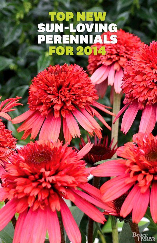 Top Perennials for 2014