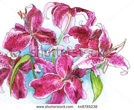 A bouquet of tiger lilies - hand-drawn watercolor illustration of beautiful lilies