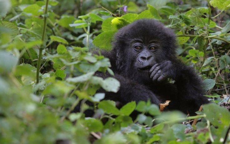 """I met a gorilla face to face."" Win the holiday of a lifetime worth R500 000 with FNB Private Clients."