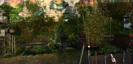 « Aucun apport de fertilisants minéraux n'a été réalisé : seule la biodégradation des déchets organiques fournit les nutriments aux plantes »... http://www.lafranceagricole.fr/actualites/cultures/agriculture-urbaine-des-cultures-productives-qui-retiennent-leau-1,2,2404743397.html
