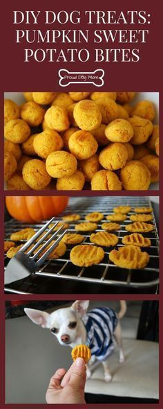 DIY Dog Treats: Pumpkin Sweet Potato Bites Perfect For Thanksgiving | Healthy Dog Treats | Homemade Dog Treats | - Tap the pin for the most adorable pawtastic fur baby apparel! You'll love the dog clothes and cat clothes!