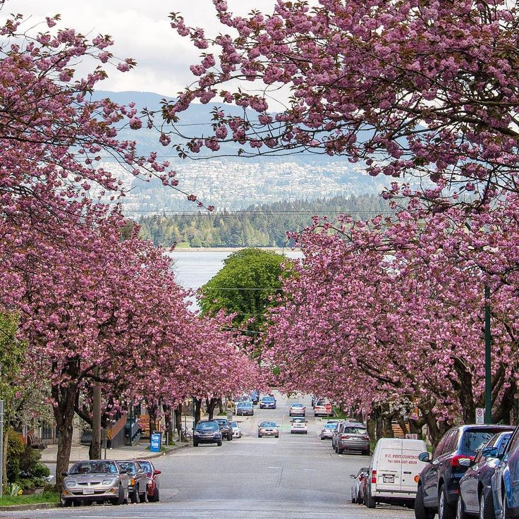 Enjoy the casual stroll in a street full of cherry blossoms in your comfortable, yet stylish shoes from SKYE Footwear.