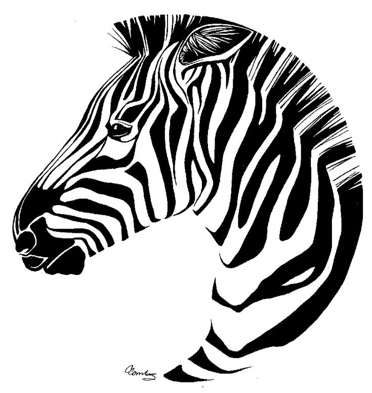 zebra drawing - photo #34