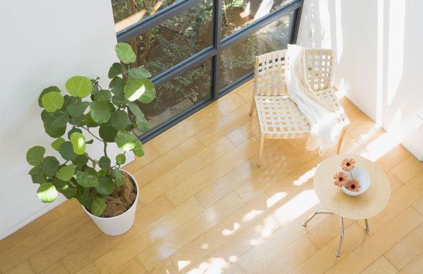風水で幸運を呼ぶ観葉植物の置き方 風水 観葉植物 家