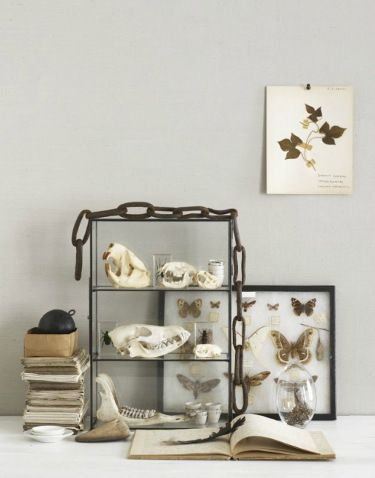 Interiors by David Prince: Skull Display, Animal Skull, Skull Decor, Animal Bones Decor, Curious Collection, Cabinets Curio, Cabinets Of Curiosities, Glasses Cabinets, Skull Collection