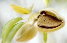 Conheça os benefícios do óleo de jojoba
