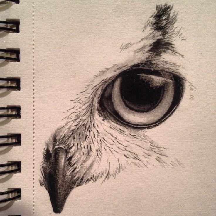 Sketch by Kayleigh foley – owl eye – November 2013Eye Sketches Owls …