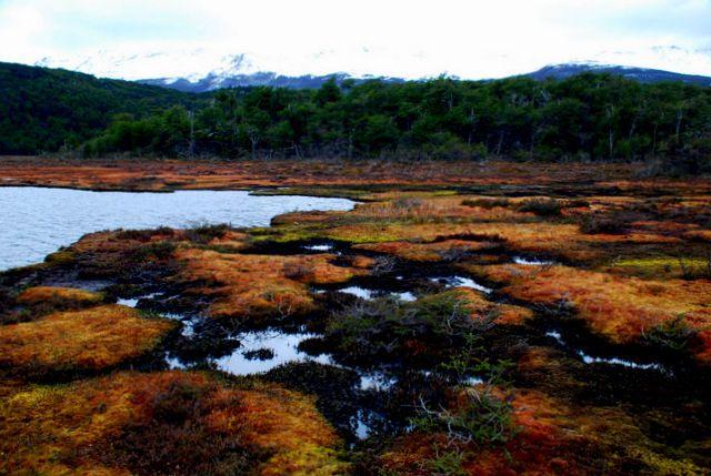 Day 106: Laguna Negro, Tierra del Fuego National Park (Argentina)