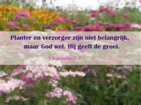 Hij geeft de groei www.relicards.nl