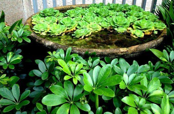 Mini bassin original pour plantes aquatiques plantes - Plantes aquatiques pour bassin de jardin ...