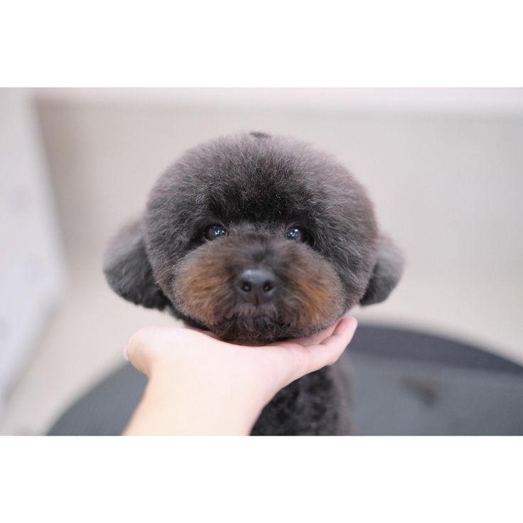 多頭飼いさんは貸し切り状態です Styling Mute Isola Nami Mute Isola Kaede スタッフ Owner Kato Isola Kato Nami Dog Salon Bulldog French Bulldog