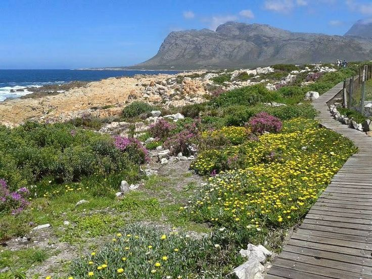 The boardwalk at Kleinmond, South Africa