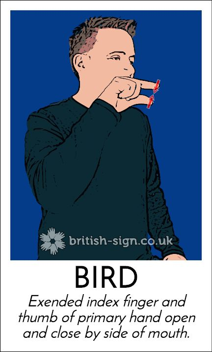 Today's #BritishSignLanguage sign is: BIRD #WorldBirdDay